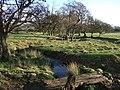 Tributary of Healeycote Burn - geograph.org.uk - 304810.jpg