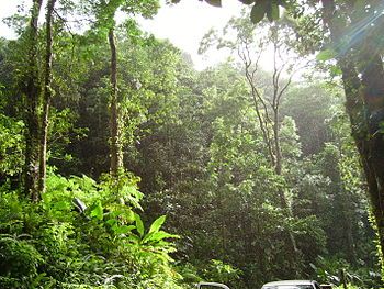 Tropical forest in Martinique near the city of Fond St-Denis