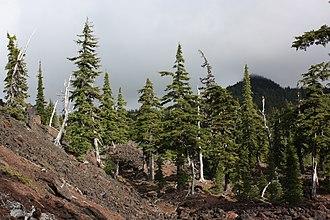 Three Sisters (Oregon) - Mountain hemlock growing on andesitic lava