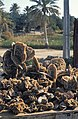 Tunesien1983-53 hg.jpg