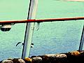 Turquoise Bird (2674472463).jpg