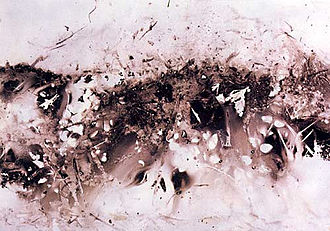 Jacek Tylicki - Natural Art, Number 183, (Created by nature), on the ground of the old forest, South Sweden, 17/08 - 29/08 1976, 47,5 x 35.5 cm