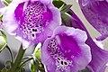 U.S. Botanic Garden in April (23696031160).jpg