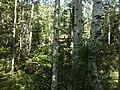 Ulchsky District, Khabarovsk Krai, Russia - panoramio (109).jpg