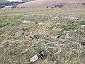 Upper Beeding, UK - panoramio (188).jpg
