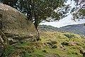 Upper Lake Viewpoint, Killarney National Park, Ring of Kerry (506623) (28218124536).jpg