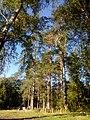 Valdaysky District, Novgorod Oblast, Russia - panoramio (3286).jpg