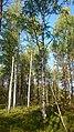 Valdaysky District, Novgorod Oblast, Russia - panoramio (3806).jpg