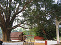 Valliyoorkkavu temple wayanad.jpg