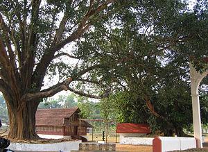Valliyoorkkavu - Image: Valliyoorkkavu temple wayanad