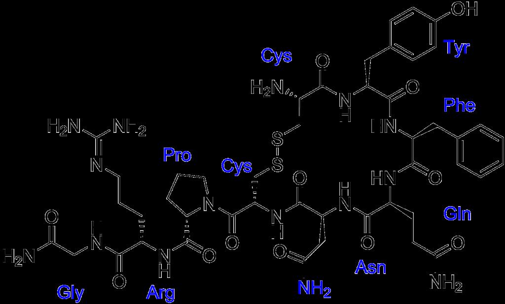 Vasopresina etiquetada.png