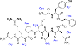 Vasopressin labeled.png