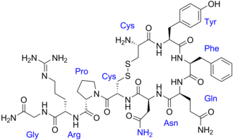 Vasopressin - Image: Vasopressin labeled