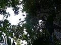 Vegetación de la Reserva de la Biosfera La Amistad Panama (RBLAP) 32.JPG