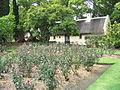 Vergelegen Rose Garden 5.JPG