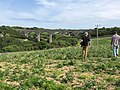 Viaduct across Trevellas Valley, St. Agnes on former railway between Chacewater and Newquay 03.jpg