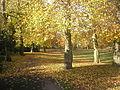 Victoria Park, Autumn.jpg