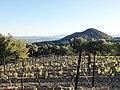 Vignoble de la vallée du Rhône AOC Séguret.jpg