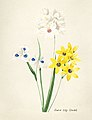 Vintage Flower illustration by Pierre-Joseph Redouté, digitally enhanced by rawpixel 42.jpg