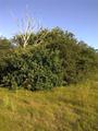 Vlakte van Waalsdorp (Waalsdorpervlakte) 2016-08-10 img. 529.png