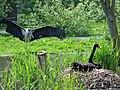 Vogelpark Niendorf Marabu.jpg