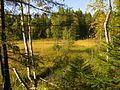 Vozhegodskiy r-n, Vologodskaya oblast', Russia - panoramio (47).jpg