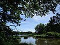 Vue de l'étang Bouteiller avec héron au loin, à Bélâbre.jpg