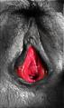 Vulvans förgård.png
