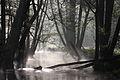 W rezerwacie przyrody Ostoja Bobrów na rzece Pasłęce.JPG