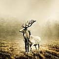 Wait A Little Longer, Martin Stranka.jpg