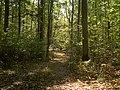 Waldweg auf dem Ebelsberg 2.jpg