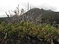 Weeds - panoramio.jpg