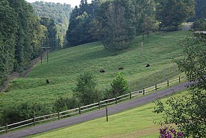 West Virginia Division of Natural Resources - Bison at the State Wildlife Center