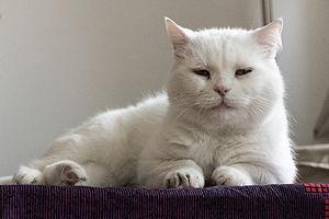 White Cat by Sebaso 2.jpg