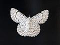 White looper moth 1990.jpg