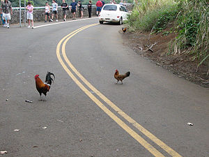 Joke - Why did the chicken cross the road?