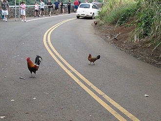 Joke - Why did the chicken cross the road? To get to the other side.