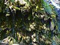 WikiProjekt Landstreicher Wasserfall Hinang 04.jpg