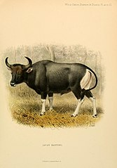 File:Wild oxen, sheep and goats of all lands, living and extinct (1898) (14745659761).jpg