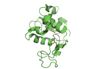 Lysozyme - HEWL active site before it binds its substrate PDB: 1DPX