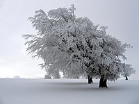 Paysage enneigé en hiver.