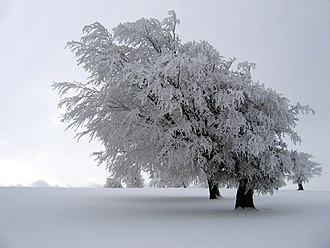 Atmospheric icing - The effect of atmospheric icing on a tree in the Black Forest of Germany..