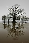 Winter Trees mirrored in Croome River - geograph.org.uk - 335145.jpg