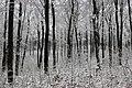 Winter im Buchenwald.jpg