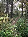 Woodland beside the Stirling and Dunfermline Railway - geograph.org.uk - 1541927.jpg