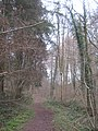 Woodland track in Manning's Wood - geograph.org.uk - 1754105.jpg
