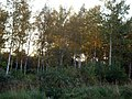 Woods - panoramio - ---=XEON=--- (1).jpg