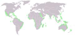 250px-World_map_mangrove_distribution.pn