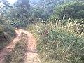 Xingye, Yulin, Guangxi, China - panoramio - markcat.jpg