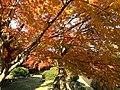 Yabakeimachi Oaza Oshima, Nakatsu, Oita Prefecture 871-0431, Japan - panoramio (1).jpg